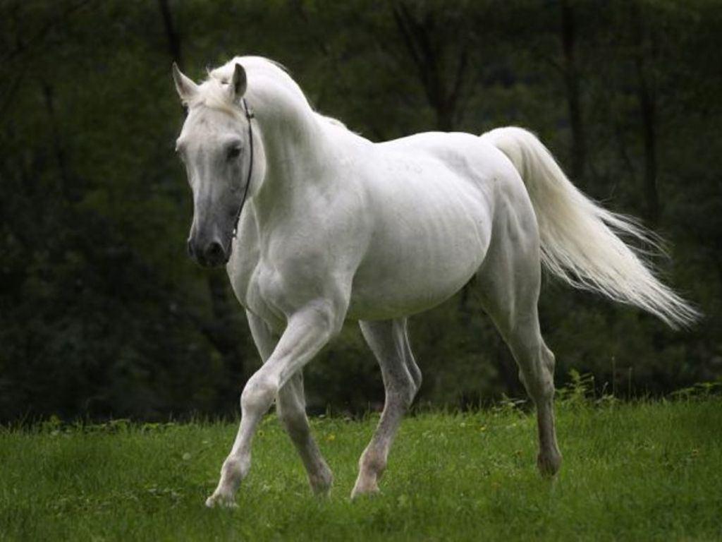 بالصور صور حصان , اجمل حصان في العالم 1700 11