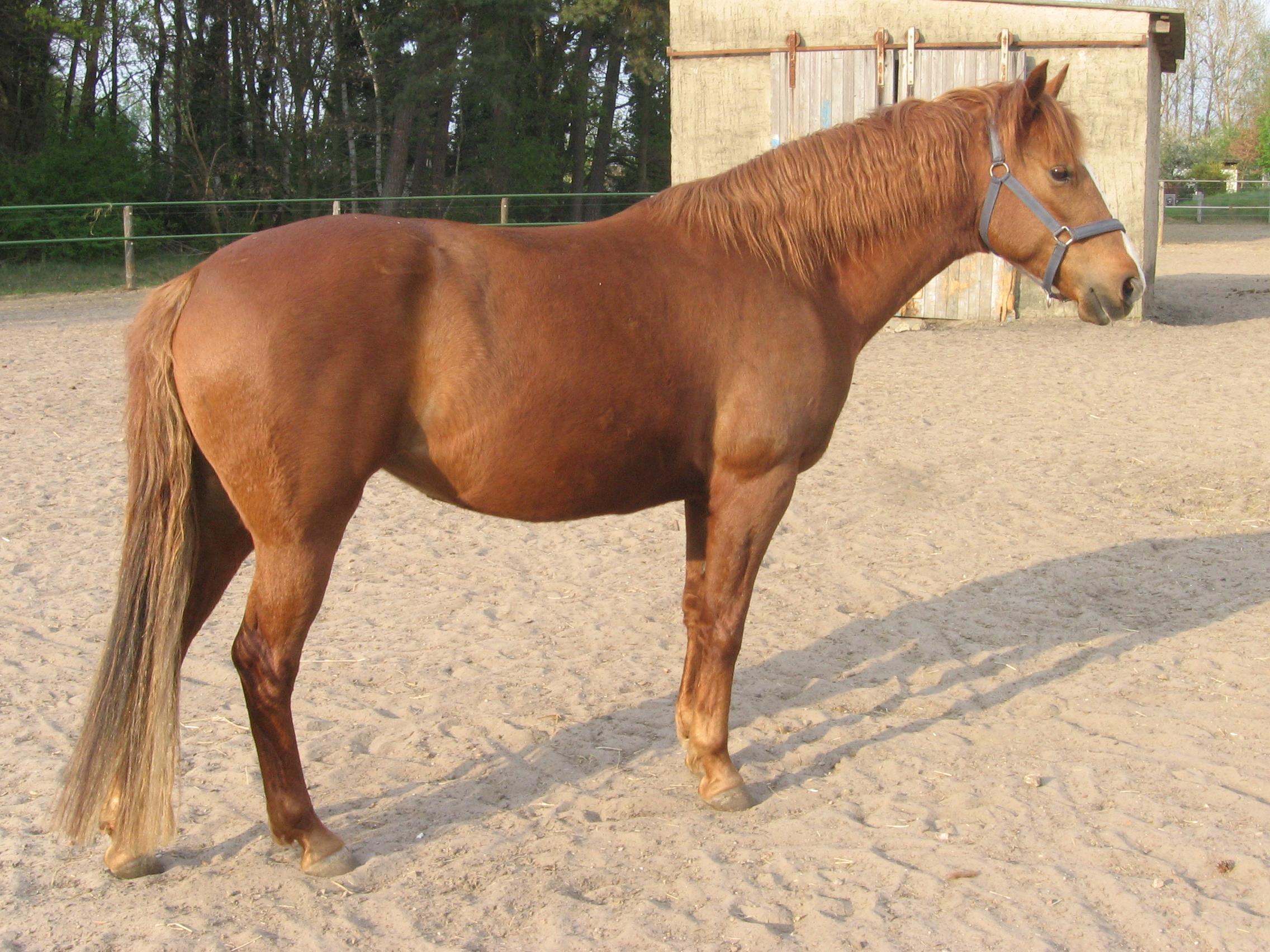 بالصور صور حصان , اجمل حصان في العالم 1700 12