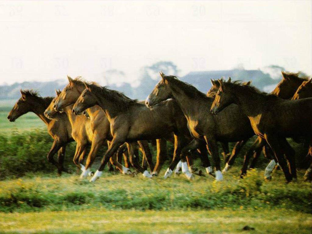 بالصور صور حصان , اجمل حصان في العالم 1700 2