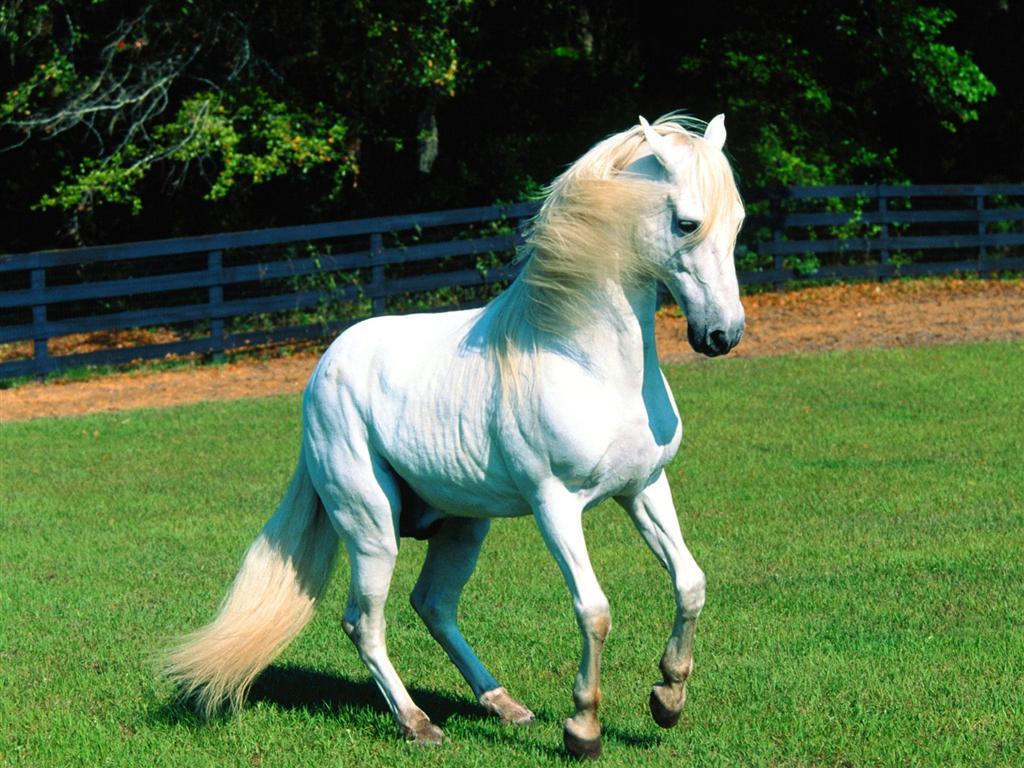 بالصور صور حصان , اجمل حصان في العالم 1700 3