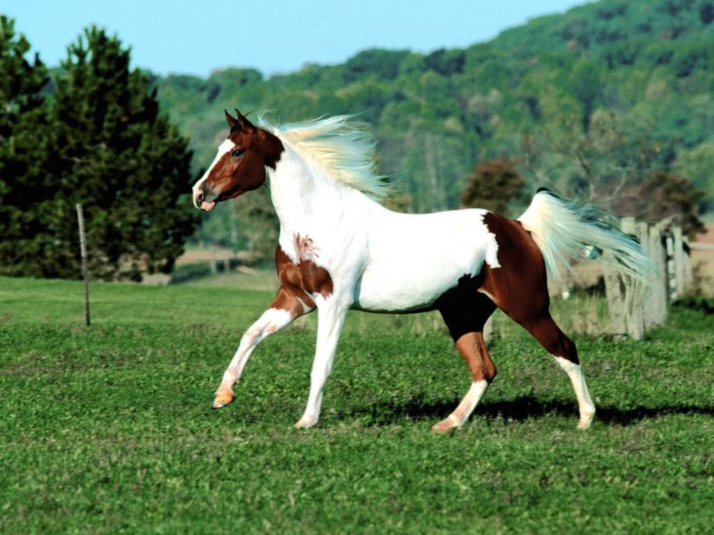 بالصور صور حصان , اجمل حصان في العالم 1700 4