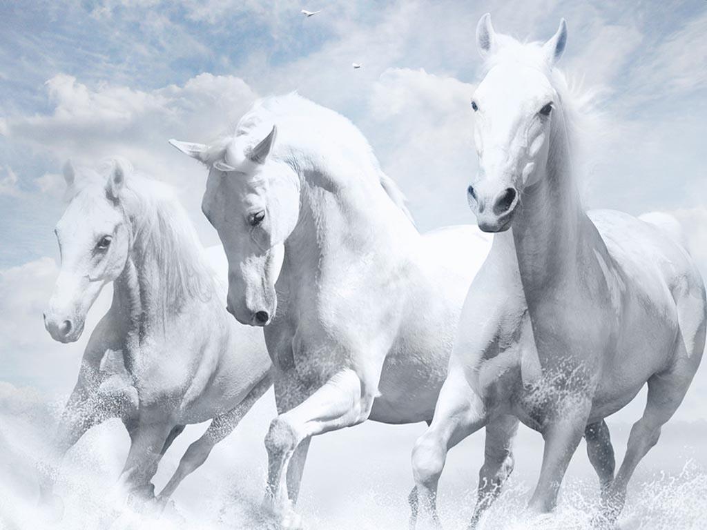بالصور صور حصان , اجمل حصان في العالم 1700 5