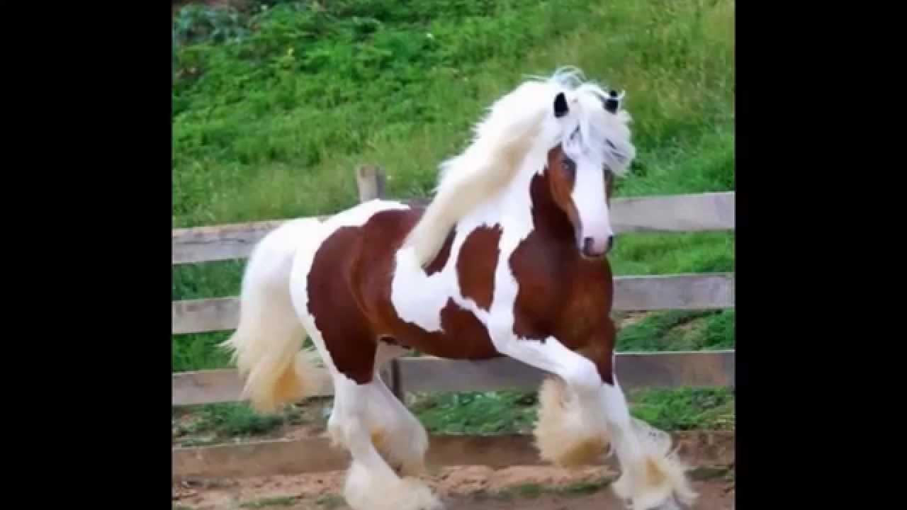 بالصور صور حصان , اجمل حصان في العالم 1700 7