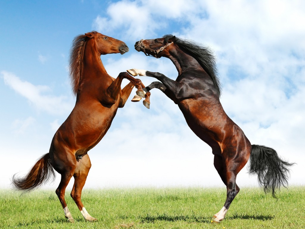 بالصور صور حصان , اجمل حصان في العالم 1700 8