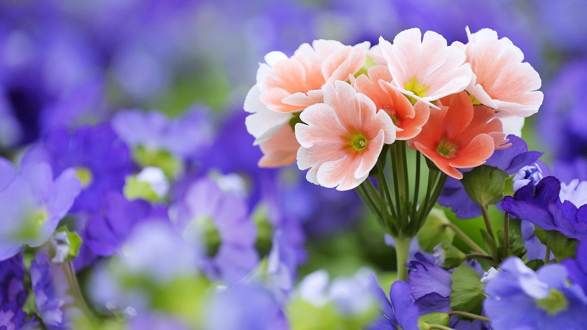 صور تنزيل صور جميلة , صور جميله ورائعه متعدت الاستخدامات