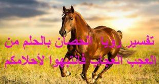 بالصور الحصان في المنام , تفسير ركوب ورؤية الخيل 11759 2 310x165