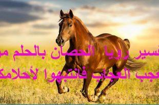 صور الحصان في المنام , تفسير ركوب ورؤية الخيل