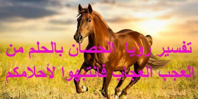 بالصور الحصان في المنام , تفسير ركوب ورؤية الخيل 11759 2 660x330