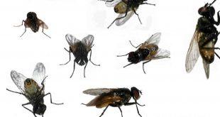بالصور حشرات المنزل بالصور , حشرات متنوعة ومنتشرة فى منزلنا 11790 11 310x165