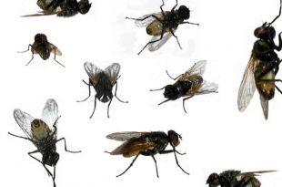 بالصور حشرات المنزل بالصور , حشرات متنوعة ومنتشرة فى منزلنا 11790 11 310x205