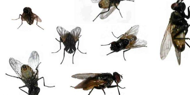 بالصور حشرات المنزل بالصور , حشرات متنوعة ومنتشرة فى منزلنا 11790 11 660x330