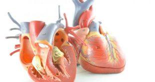 بالصور كيف اعرف ان قلبي تعبان , تعب عضلات القلب واعراضه 11870 2 310x165