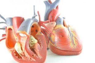 صور كيف اعرف ان قلبي تعبان , تعب عضلات القلب واعراضه