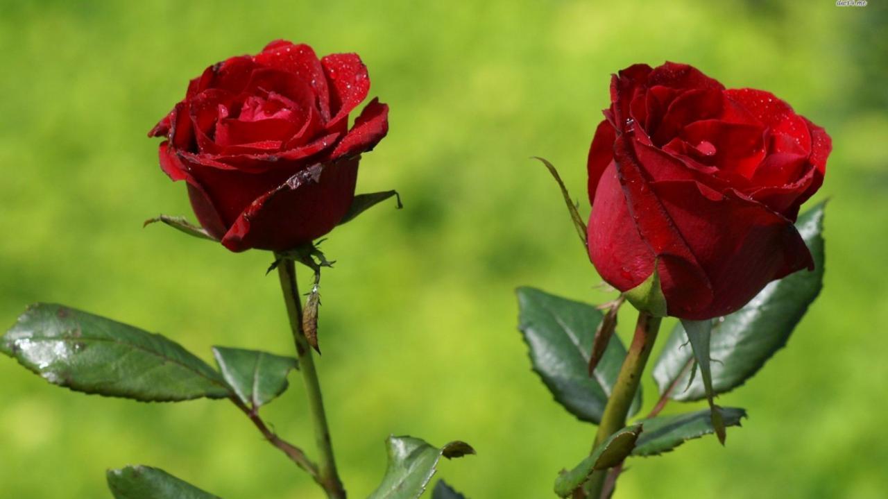 بالصور اسماء بلوتوث رومانسيه , احدث اسماء رومنسية 11874 7