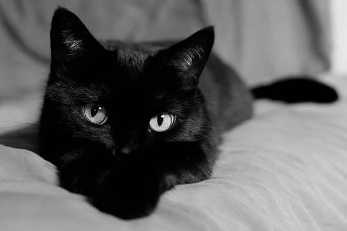 صورة تفسير حلم رؤية القطط السوداء , رائيت قطة سوداء في المنام ماذا يعني