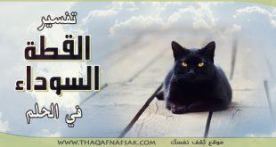 بالصور تفسير حلم رؤية القطط السوداء , رائيت قطة سوداء في المنام ماذا يعني 11344 4 310x165