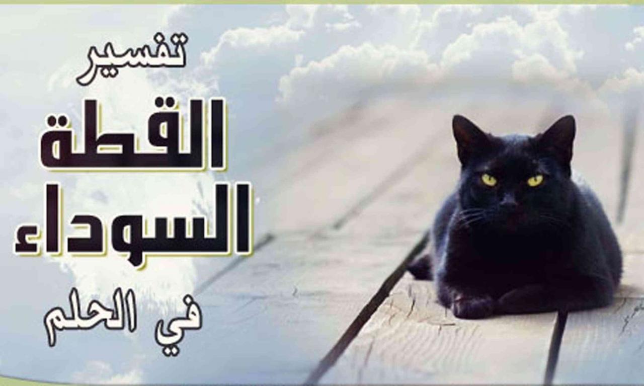 صورة تفسير حلم قطة سوداء , ماذا تعني القطة السوداء في المنام