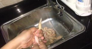 صور كيفية تنظيف الممبار , الممبار المصري اللذيذ وطرق تنظيفه