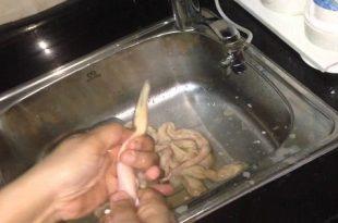 صورة كيفية تنظيف الممبار , الممبار المصري اللذيذ وطرق تنظيفه