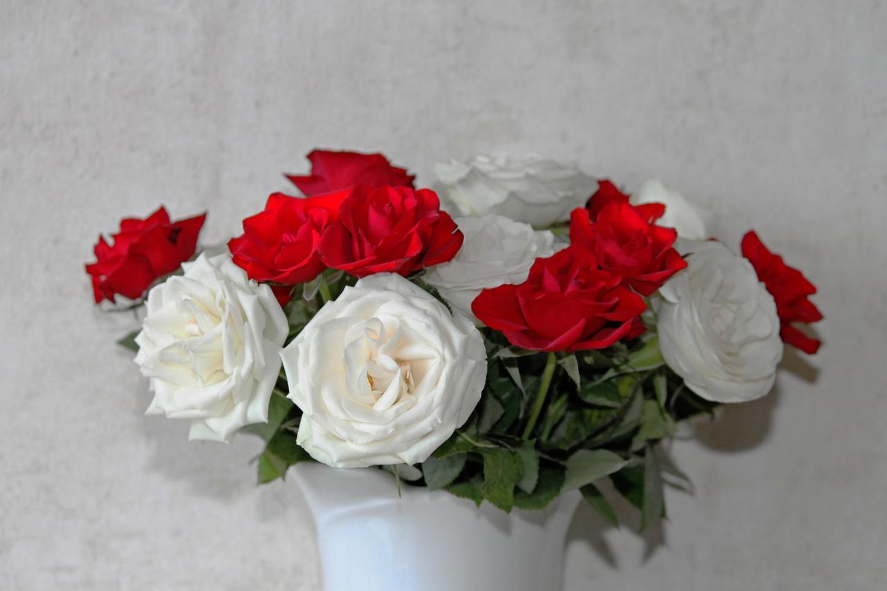 صورة صور ورود عيد الحب , احلي و اجمل صور ورود حمراء
