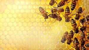 صور لدغ النحل في المنام , اعرف تفسير لدغ النحل فى الحلم