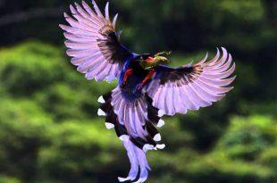 صور احلى طيور في العالم , ما اجمل طيور العالم