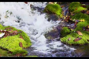 صورة مناظر خلابة متحركة , احلي و اجمل صور متحركه للطبيعه