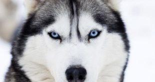 صورة افضل كلاب العالم , انواع فريدة من الكلام حول العالم