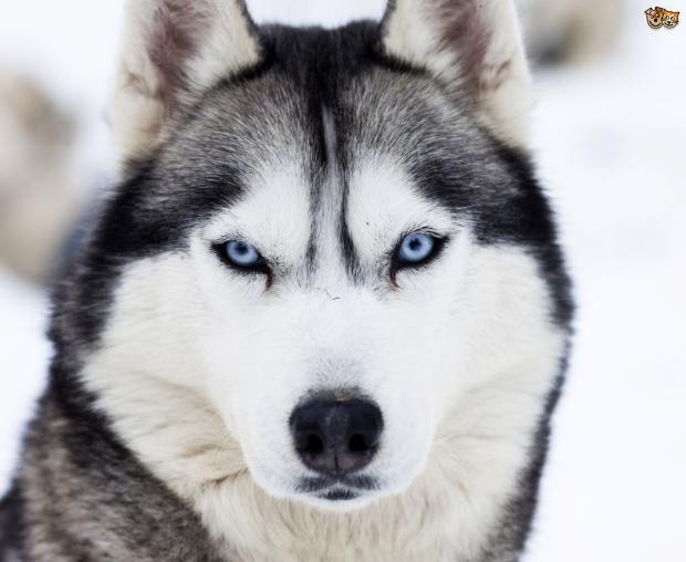 صور افضل كلاب العالم , انواع فريدة من الكلام حول العالم
