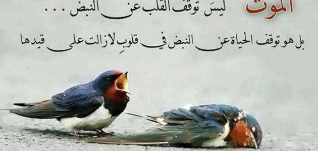 صورة كلمات معبرة عن الحياة فيس بوك , كلمات من القلب للقلب عن مواقف حقيقة في الفيس 11279 3