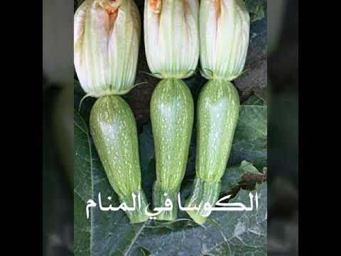 صورة تفسير حلم الكوسا الخضراء , ماذا تعني الكوسا في الحلم لكنها خضراء 11309 1