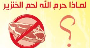 صورة لماذا حرم الله اكل لحم الخنزير , هل تعرف لماذا لا يؤكل لحم الخنزير في البلاد الاسلامية