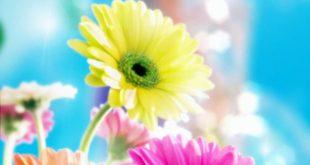 صورة خلفيات زهور , مناظر ورود بديعه جدا