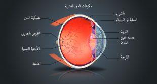 صور مكونات العين , ماهى اجزاء العين