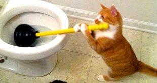 صورة قطط مضحكه , شاهد اقوي المواقف المضحكة للقطط