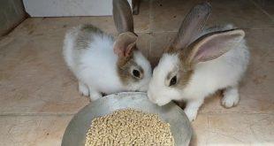 صورة كيفية تربية الارانب , حيوانات اليفه لتربية المنازل