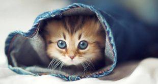 صورة اجمل صور قطط , كائنات لطيفة للتربية في المنازل
