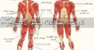 صورة كم عدد عضلات جسم الانسان , تعرف على انواع العضلات الموجودة بجسمك
