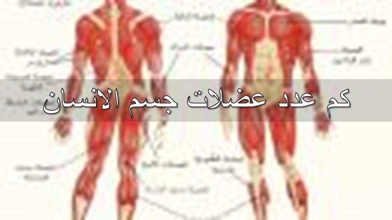 كم عدد عضلات جسم الانسان تعرف على انواع العضلات الموجودة بجسمك مساء الورد