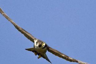 صورة اكبر طائر في العالم , مالم تعرفه عن النعام من قبل