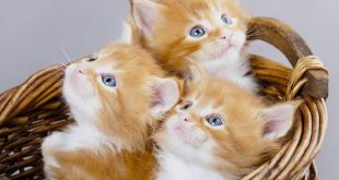 صورة قطط جميلة , اروع القطط بالعالم