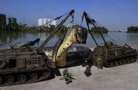 صورة ثعبان مخيف جدا , اكبر ثعبان في العالم
