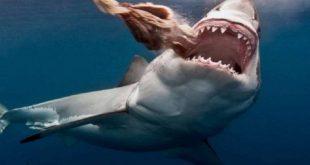 صورة اكتر سمكة مفترسة , صور سمك القرش