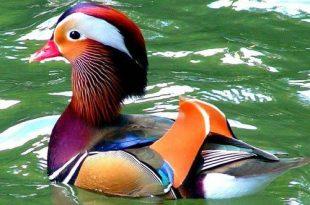 صورة طيور ملونة بألوان تخطف العين , اجمل الطيور في العالم