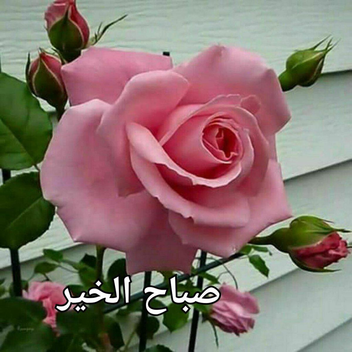 صورة شعر صباح الخير حبيبتي 5661 3